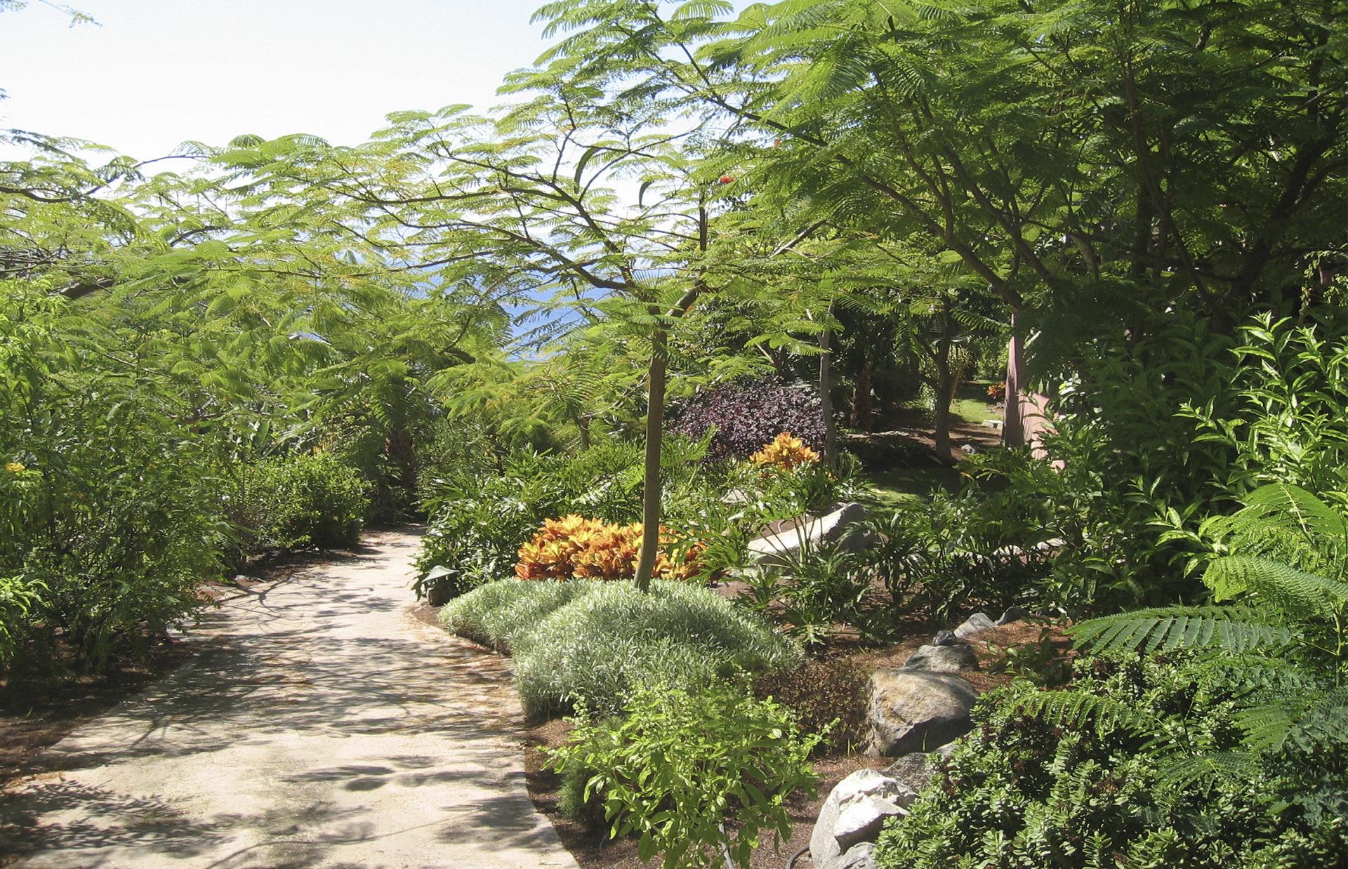 Colaboración en paisajismo de Hotel Abama, Tenerife