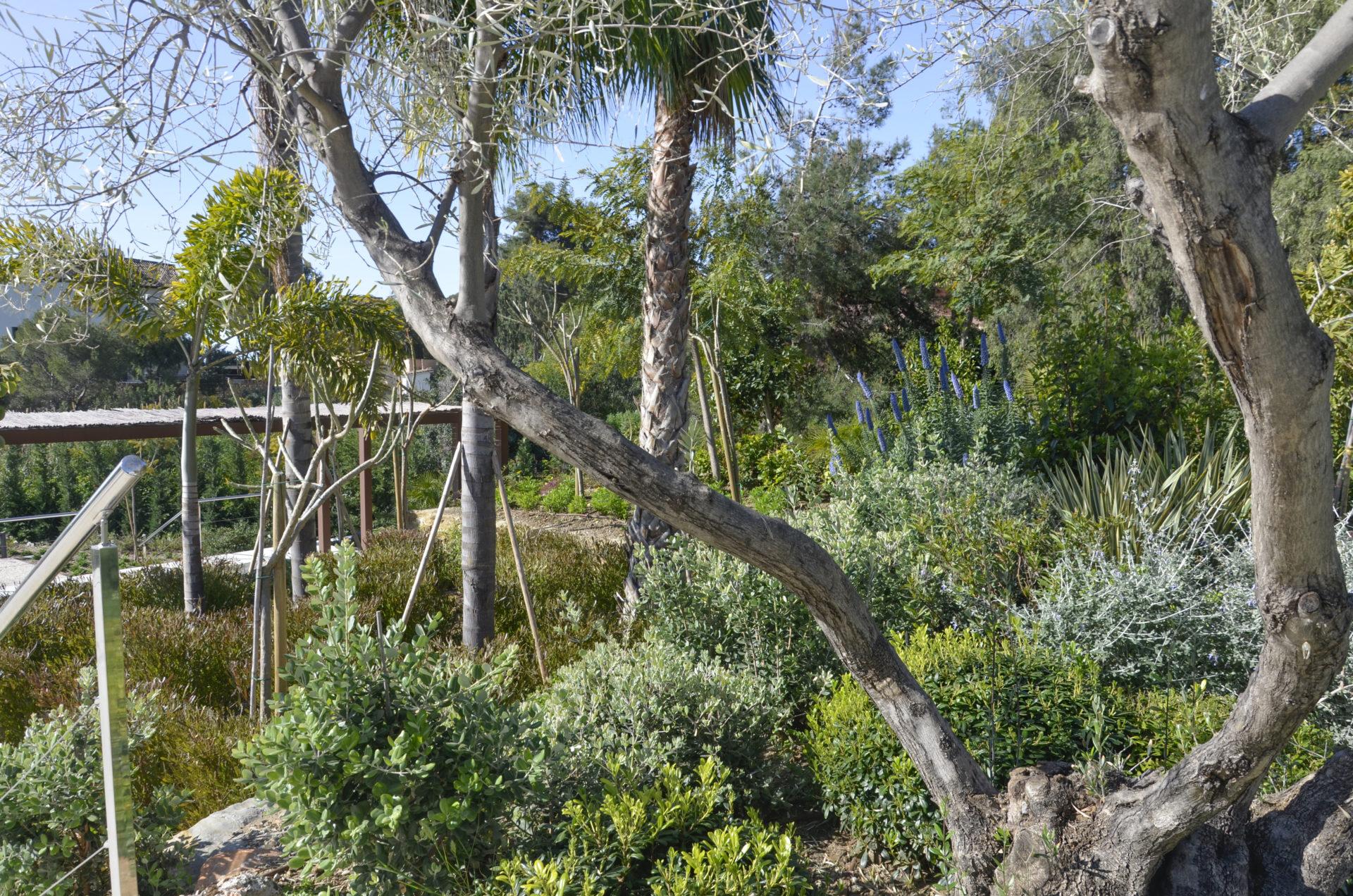 El jardín de Villa Serenity. Marbella. Sierra Blanca