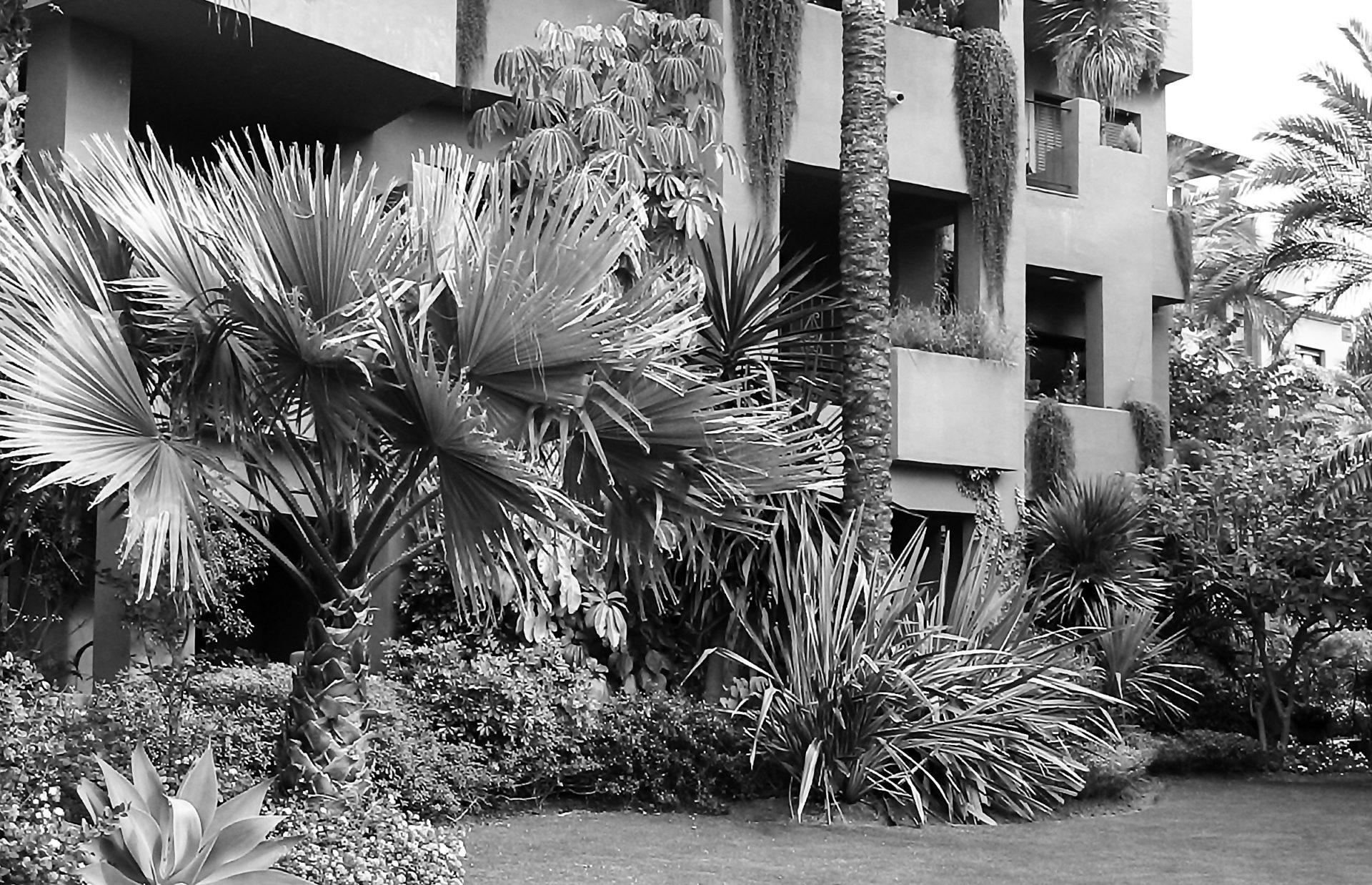 Paisajismo Marbella Urbanización Alicate